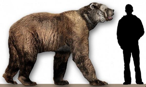 Короткомордый медведь. Иллюстрация: Dantheman9758