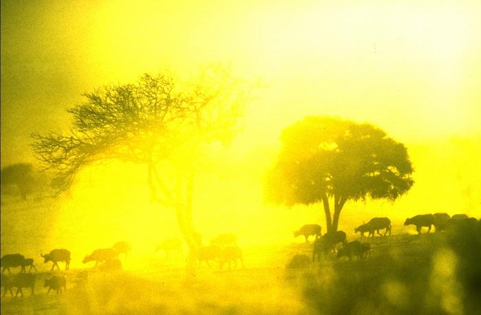 Африка имеет неисчерпаемые и неиспользуемые энергетические ресурсы. Фото: steve mcnicholas/flickr.com