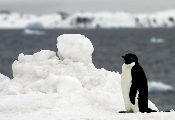 Российская делегация сводит на нет всемирные усилия по защите Антарктики. Фото: RODRIGO ARANGUA/AFP/Getty Images