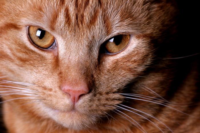 Учёные доказали, что у животных есть шестое чувство. Фото: morguefile.com