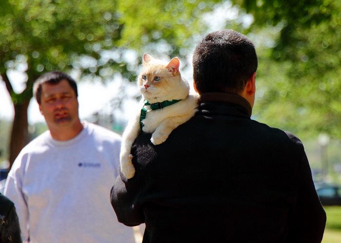 Владельцы кошек живут дольше на 10 лет. Фото: Mr. T in DC/flickr.com