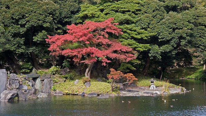 Японский сад, Токио, Япония. Фото: Gribeco/commons.wikimedia.org