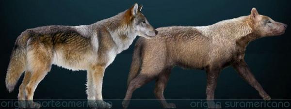 Страшный волк. Иллюстрация: Sergiodlarosa