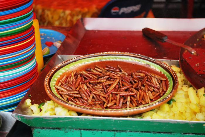 Красные черви агавы. Фото: Alejandro LinaresGarcia/Wikimedia Commons