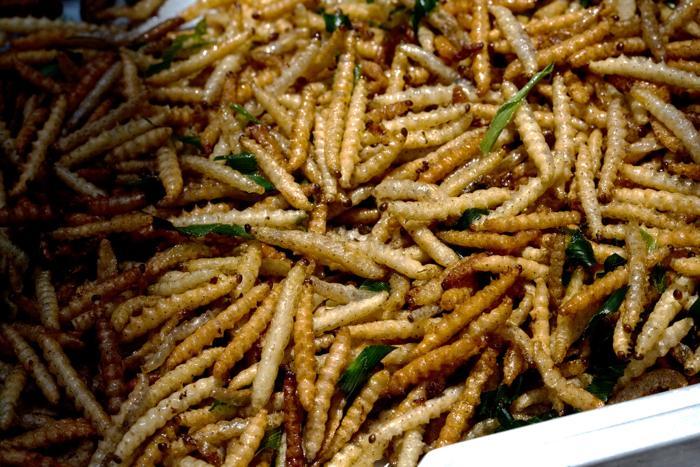 Бамбуковая гусеница. Фото: Wikimedia Commons