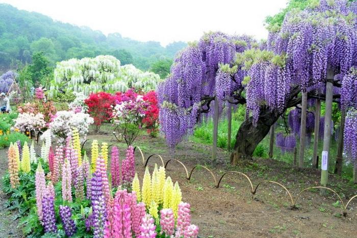 Живописные сады в японском городе Китакюсю. Фото: Bronte Fusten/flickr.com