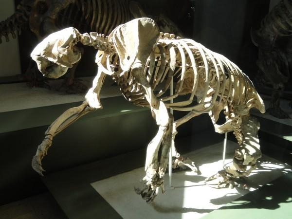 Гигантский ленивец. Иллюстрация: Daderot