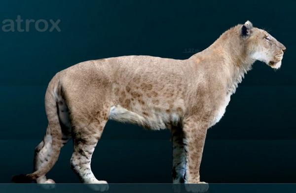 Американский лев. Иллюстрация: Ed Bierman