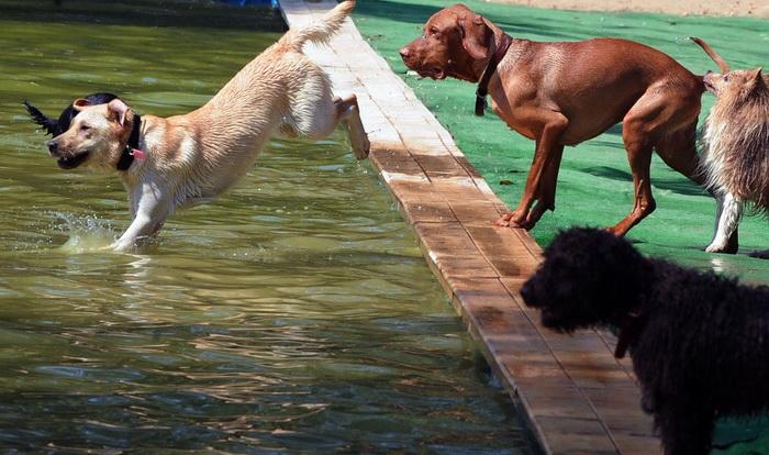 В Риме открыли собачий пляж. Фото: TIZIANA FABI/AFP/Getty Images