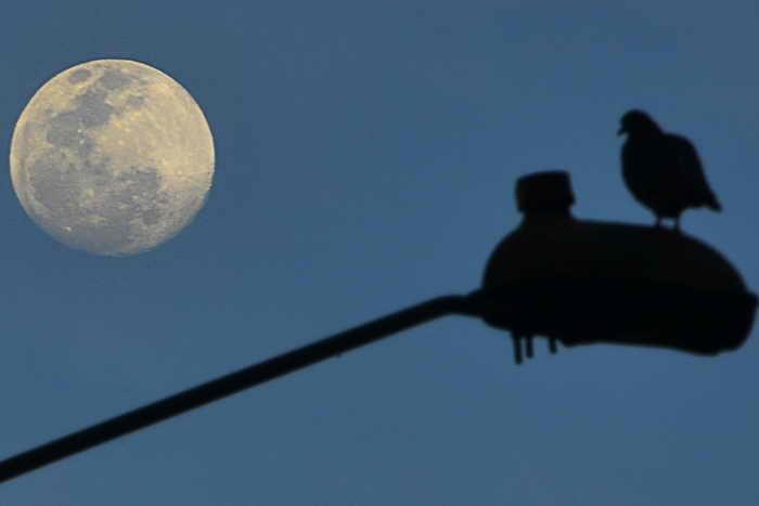 В выходные земляне смогут увидеть удивительное астрономическое явление — суперлуну, то есть необычайно большую и яркую Луну. Фото:  LUIS ACOSTA/AFP/Getty Images