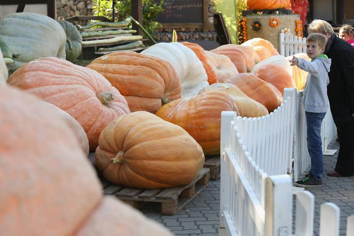 Ферма Винкельманне в пригороде Берлина провела ежегодный фестиваль тыквы 1 октября 2013 года, представив развлечения и украшения из десятков тысяч тыкв и кабачков около 80 разных видов. Фото: Sean Gallup/Getty Images