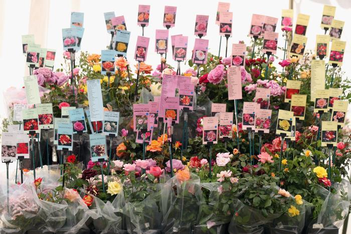 Выставка цветов открылась в лондонском  Дворце Хэмптон Корт 8 июля 2013 года. Фото: Oli Scarff/Getty Images