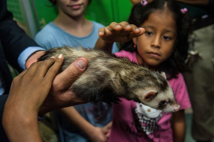 Образовательная программа «Вхождение в контакт с природой» прошла 12 октября 2013 года в зоопарке Рима (Италия). Фото: Giorgio Cosulich/Getty Images