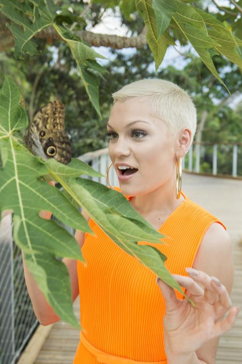Британская певица Джесси Джей. Модные причёски июля продемонстрировали знаменитости на ярких мероприятиях июля 2013 года. Фото: James Ram/The Eden Project via Getty Images