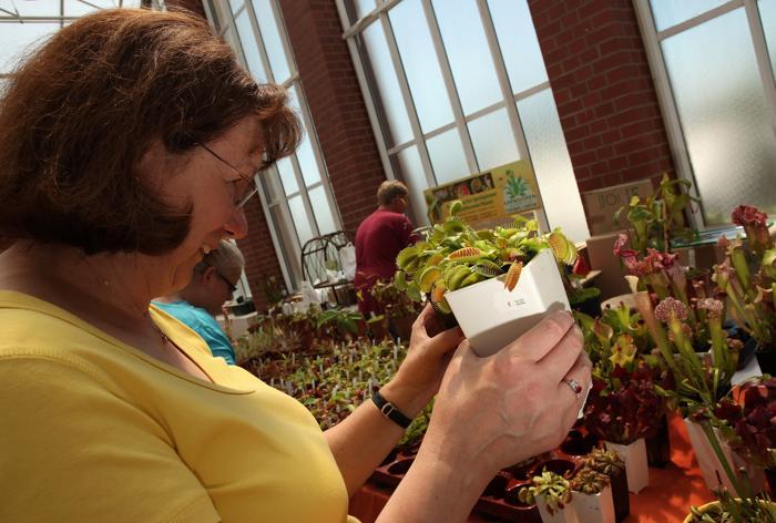 Презентация плотоядных растений прошла в Ботаническом саду Берлина 21 июля 2013 года. Фото: Adam Berry/Getty Images