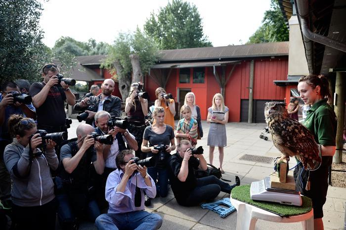 Филин Maкс (1,9 кг) прошёл процедуру взвешивания в Лондонском зоопарке 21 августа 2013 года. Фото: Bethany Clarke/Getty Images