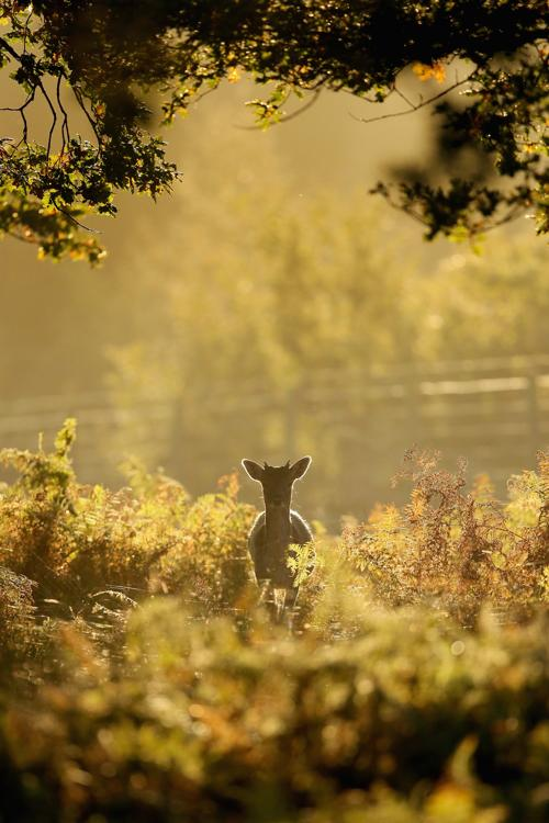 Осенняя пора в Великобритании. Олтрингем, 24 октября 2013 года. Фото: Christopher Furlong / Getty Images
