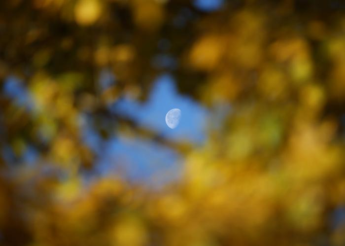 Осенняя пора в Великобритании. Лондон, 24 октября 2013 года. Фото: Peter Macdiarmid/Getty Images