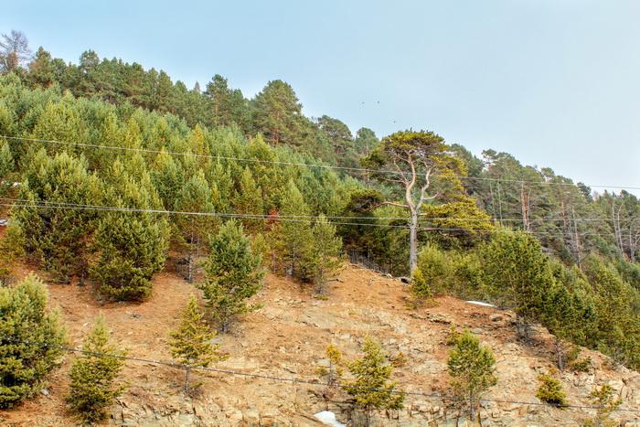 На каменистых склонах могут расти только стойкие сосны и лиственницы. Фото: Сергей Мошкирёв/Великая Эпоха (The Epoch Times)