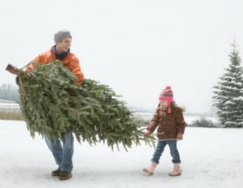 Выбирайте ту елку, которая принесет вам и вашим близким радость в новогодний праздник. Фото: Getty Images