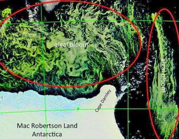 «Мы предполагаем, что там сейчас происходит громадный пир», - сказал морской гляциолог и метеоролог Лизер. Живые существа этого антарктического региона, от криля до китов, могут набивать свои животы этими водорослями. Фото: abendblatt.de