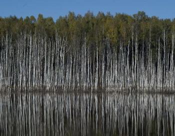 Лес. Фото РИА Новости