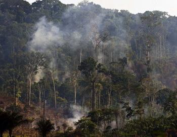 Деревья дождевых лесов Амазонии сжигают в Северной Бразилии для расчистки земель для животноводства. В ходе нового исследования саванн Французской Гвианы обнаружилось, что коренные народы сотни лет обрабатывали земли без использования огня. Фото: Antonio Scorza/AFP/Getty Images