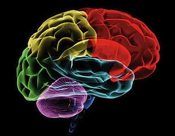 Когда людей просят визуализировать цвета под гипнозом, у некоторых из них происходят значительные изменения в областях мозга, отвечающих за визуальное восприятие. Фото с сайта theepochtimes.com