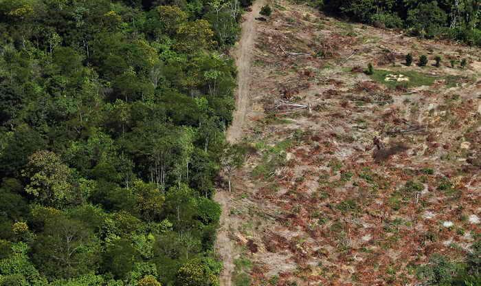 Исчезновение тропического леса приводит к изменению климата. Фото: Mario Tama/Getty Images