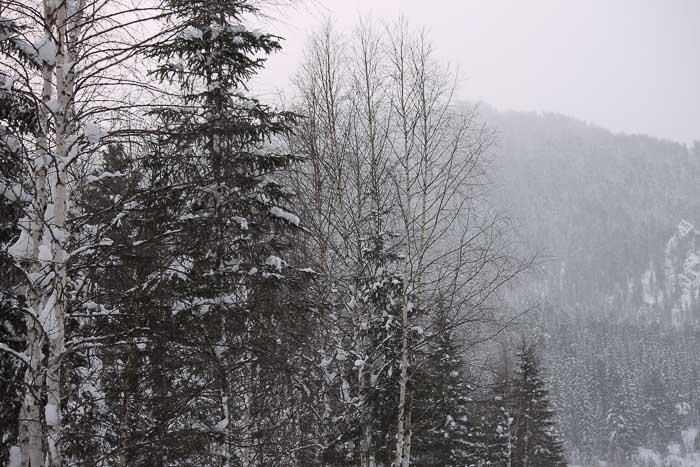 Спящие деревья. Фото: Максим  Кочетков/Великая Эпоха (The Epoch Times)