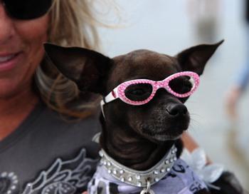 Мода для четвероногих. Фото: ROBYN BECK/AFP/Getty Images
