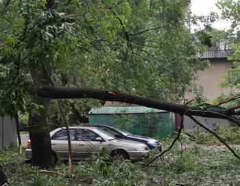 Последствия урагана. Фото РИА Новости