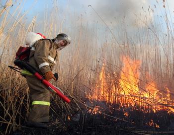 Лесной пожар. Фото РИА Новости