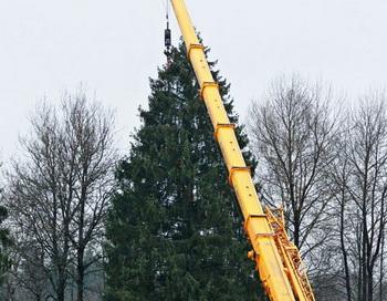 Рубка главной новогодней ели в Подмосковье. Фото РИА Новости