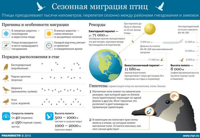 Сезонная миграция птиц