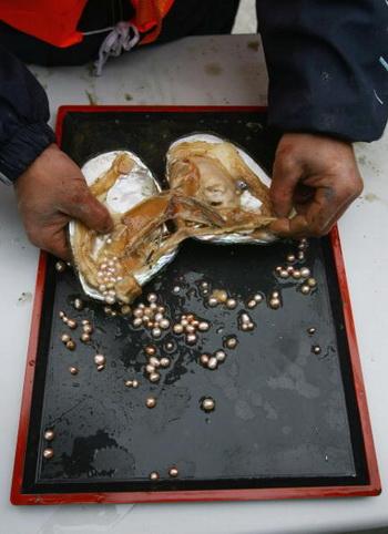 Таинственное мерцание жемчуга: самый женственный акцент лета. Рабочий вынимает жемчужины из моллюска. Фото: China Photos/Getty Images