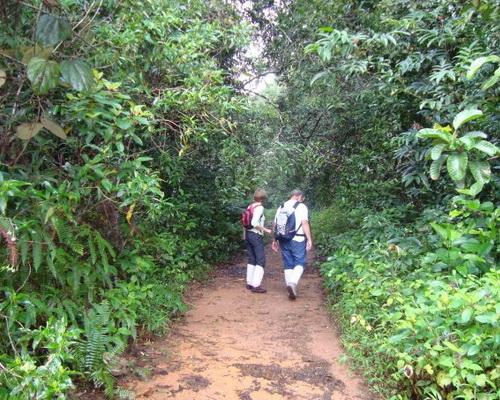 Что взять с собой в Шри-Ланку. Фото: elephantours.com  Какие места посетить