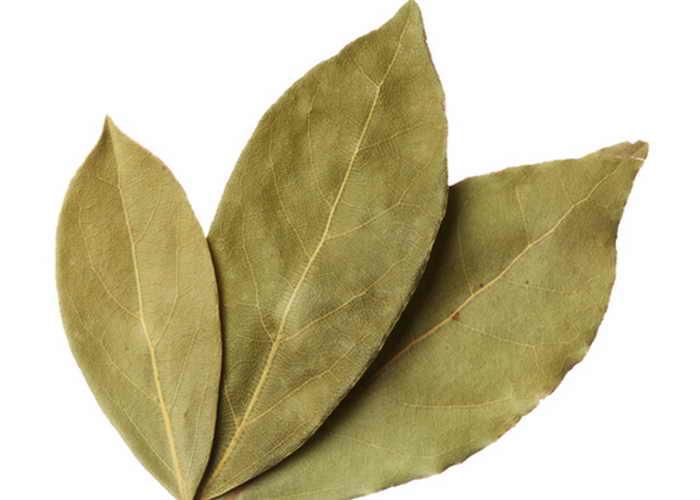Лавровые листья. Фото: Shutterstock