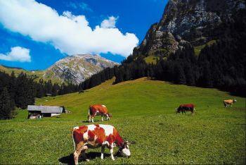 Пастбище в Швейцарии. Фото: Photos.com