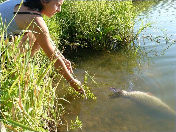на что ловить белого амура в сентябре на пруду