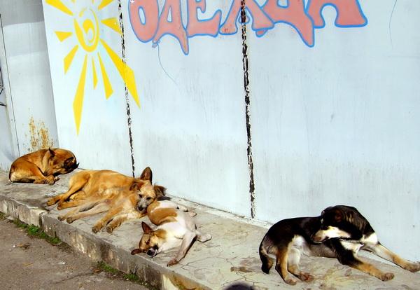 Пусть всегда будет солнце! Фото: Ирина Рудская/Великая Эпоха (The Epoch Times)