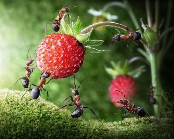 Жизнь  муравьев. Фото: news.zhengjian.org