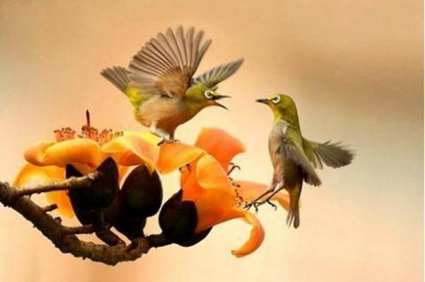 Самые красивые птицы в мире. Фото: news.zhengjian.org