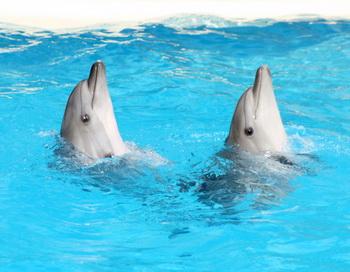 Дельфины. Фото: Konstantin Kirillov/Photos.com