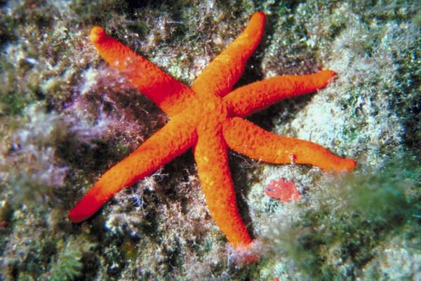 Мальта. Фото: Photos.com