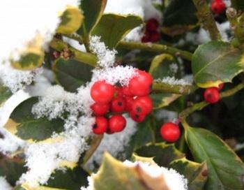 Корни многих традиций зимнего солнцестояния восходят к дохристианскому периоду. Фото: Карстен Фрелиха / Pixelio