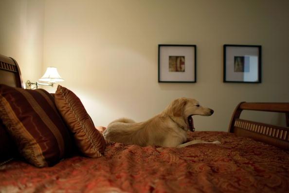 Хорошо полежать, когда никто не мешает. Фото: Getty Images