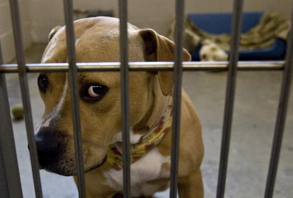 И за что меня в эту тюрьму посадили? Фото: Getty Images