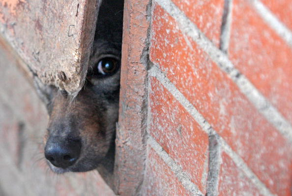 Что там снаружи, хоть в щелочку гляну. Фото: Getty Images