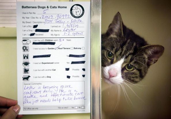Я, Лестер, кот-джентльмен, ищу себе хозяев. Фото: Getty Images